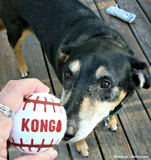 senior hound mix dog with toy