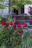 Gehölze für einen mediterranen Garten, mediterran gestaltete Blumenbeete
