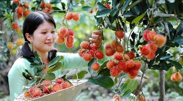 Vườn trái cây Vĩnh Kim, Tiền Giang