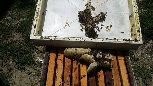 Πωλούνται διώροφα μέλισσα βόμβες στο Αγρίνιο