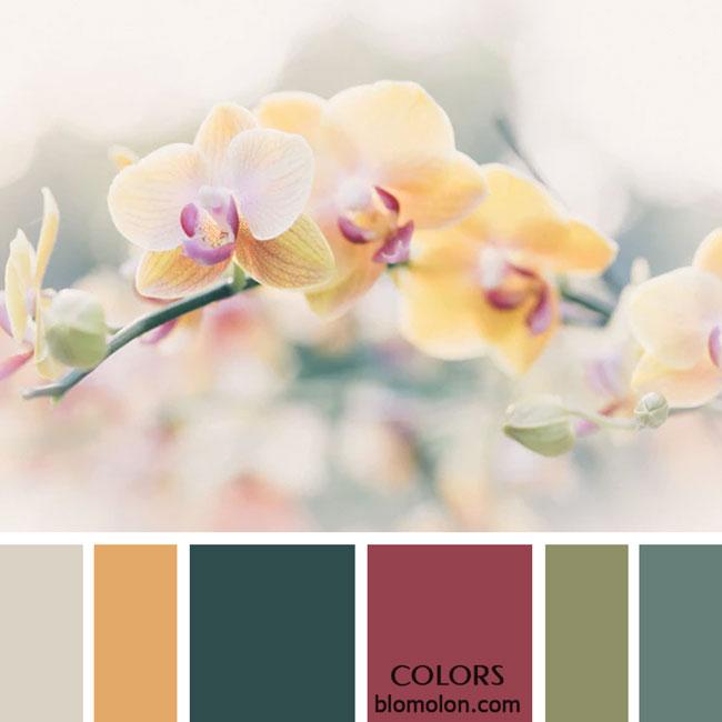 variedad_en_color_paletas_de_colores_25