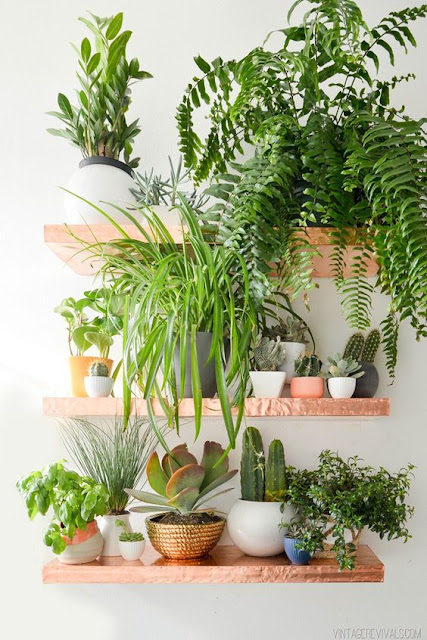prateleiras-para-plantas