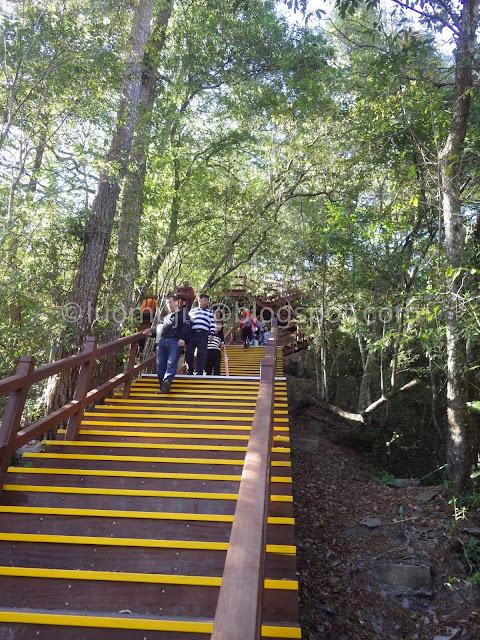 Taiwan Aowanda (奧萬大) maple season - Maple Trail Strongman Slope