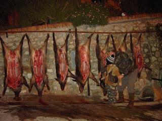 wild boar hunt Tuscany