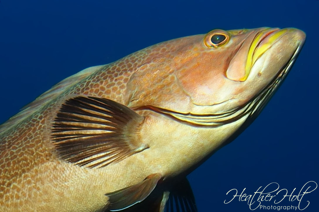 SILVER SANDS: Groupers Galore!