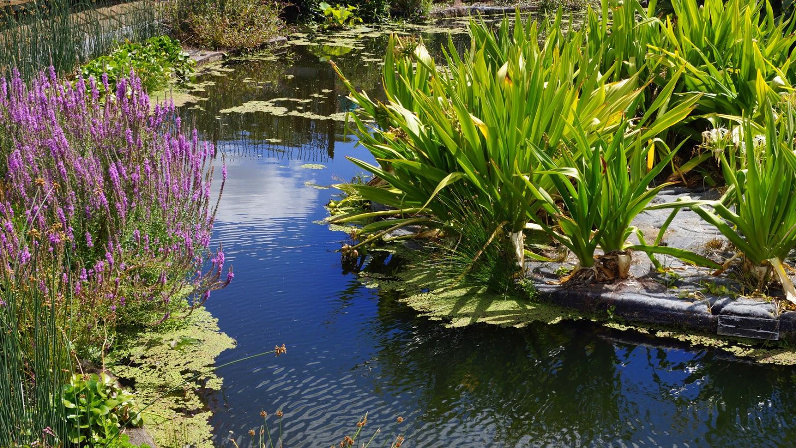 Melbourne fresh daily gardens and ponds for Garden pond melbourne