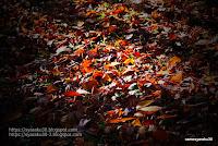 日が差す落ち葉の写真