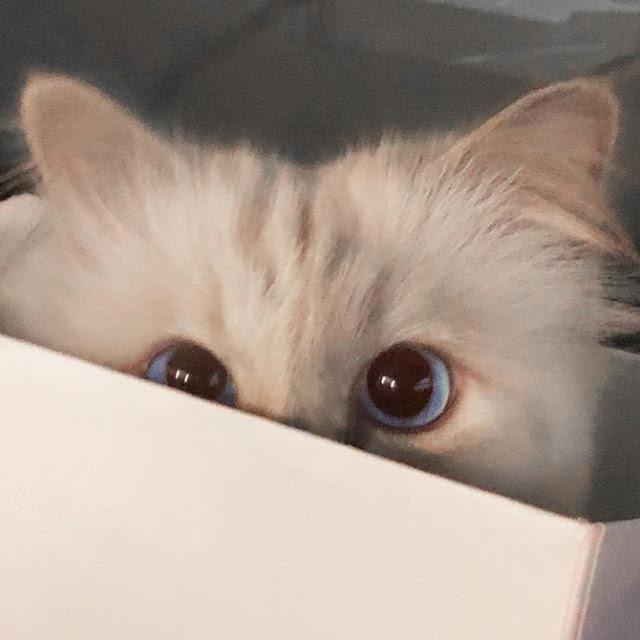 Choupette, Bisakah Kucing Karl Lagerfeld Mendapatkan Warisan Triliun Rupiah?
