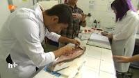 Pesquisadores da UFPE analisam conteúdo gastrointestinal da pescada-amarela
