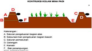 Pembesaran Udang Galah Di Tanaman Padi (UGADI)