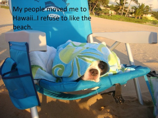 Ashamed Dogs