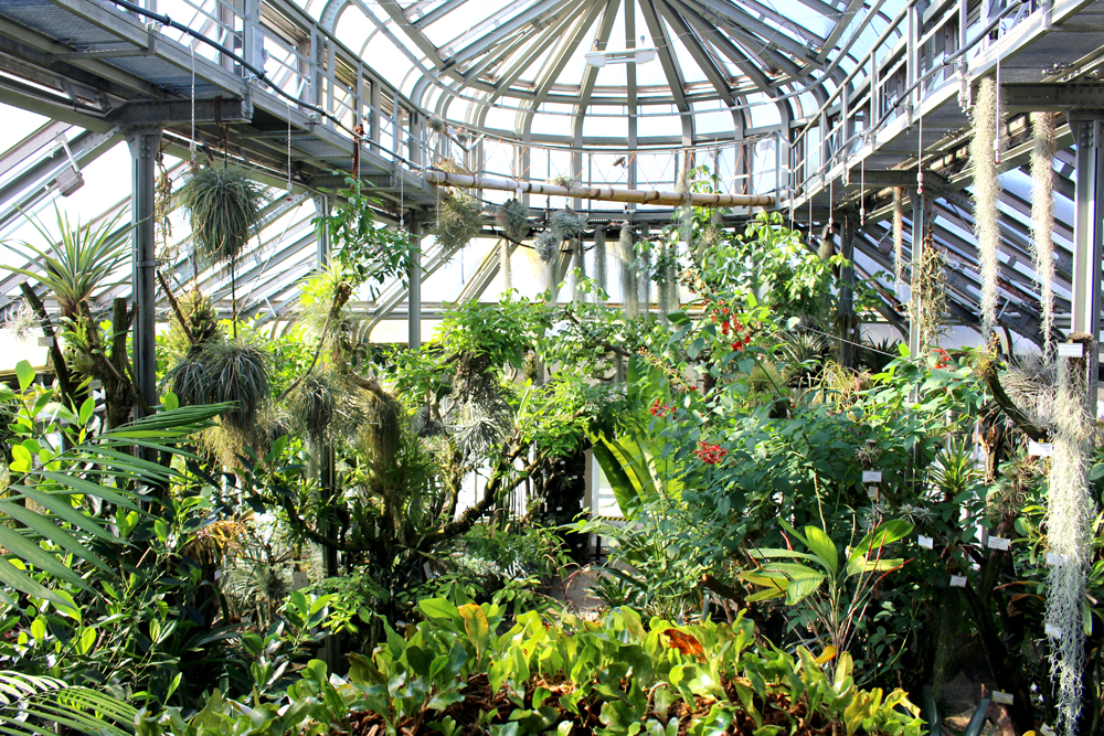 Berlin Botanical Garden greenhouse - travel & lifestyle blog