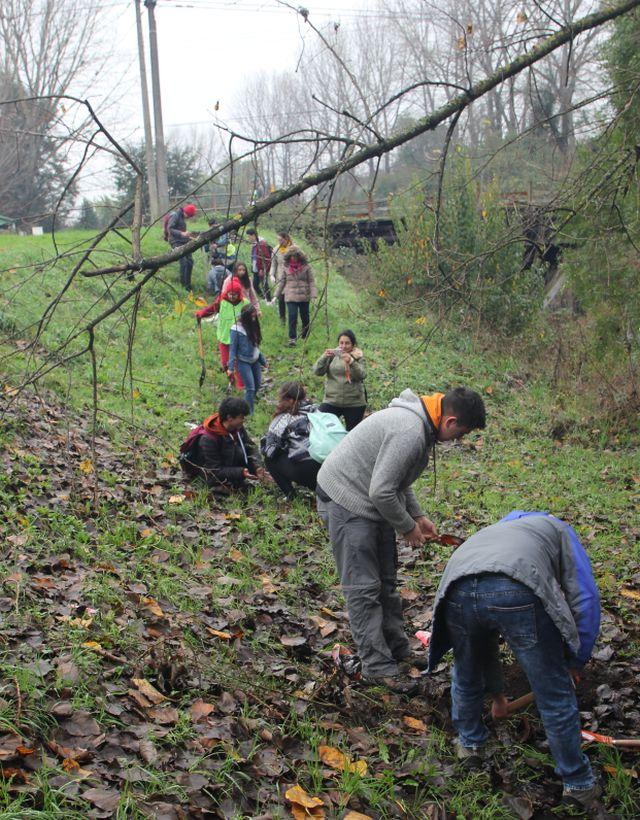 Plantaron árboles y limpieza a orillas del río Damas