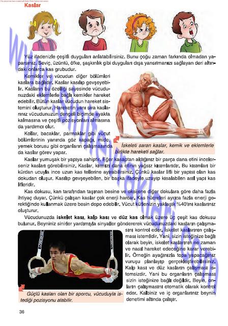 6. Sınıf Fen Bilimleri Tuna Matbaa Yayınları Ders Kitabı Cevapları Sayfa 36