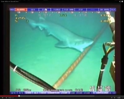 Ini Cara Google Lindungi Kabel Bawah Laut