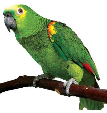 Amazon Parrot S Png Images Geo Png Images