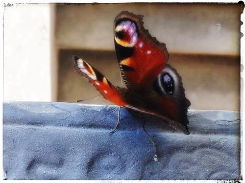 <image article>im-prinzip-tango-ripota-erste-liebe