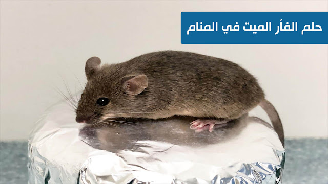 حلم الفأر الميت في المنام