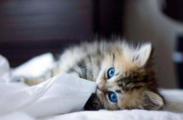 وصار للقطط في دمشق فندقاً خاصاً لتقديم الرعاية!