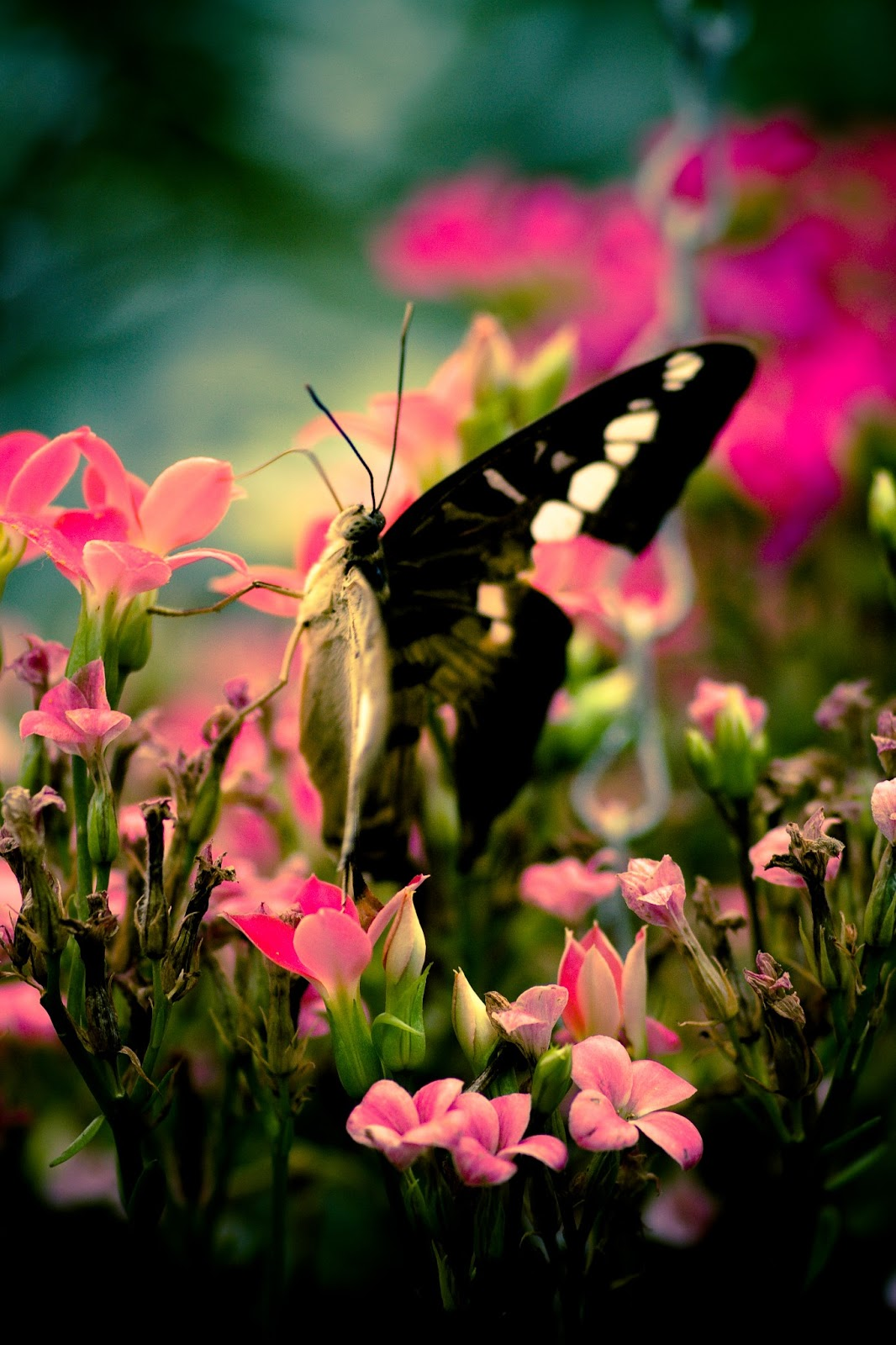 Cool Picture Collection: 25+ Awesome Butterfly Images