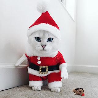 coby kucing ganteng sinterklas