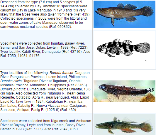 List of Freshwater Fish in the Philippines