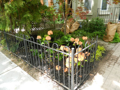 Summerhill garden makeover after by Paul Jung Gardening Services Toronto