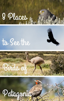 Pinterest Pin: Eight Great Places to Find the Birds of Patagonia in Argentina and Chile