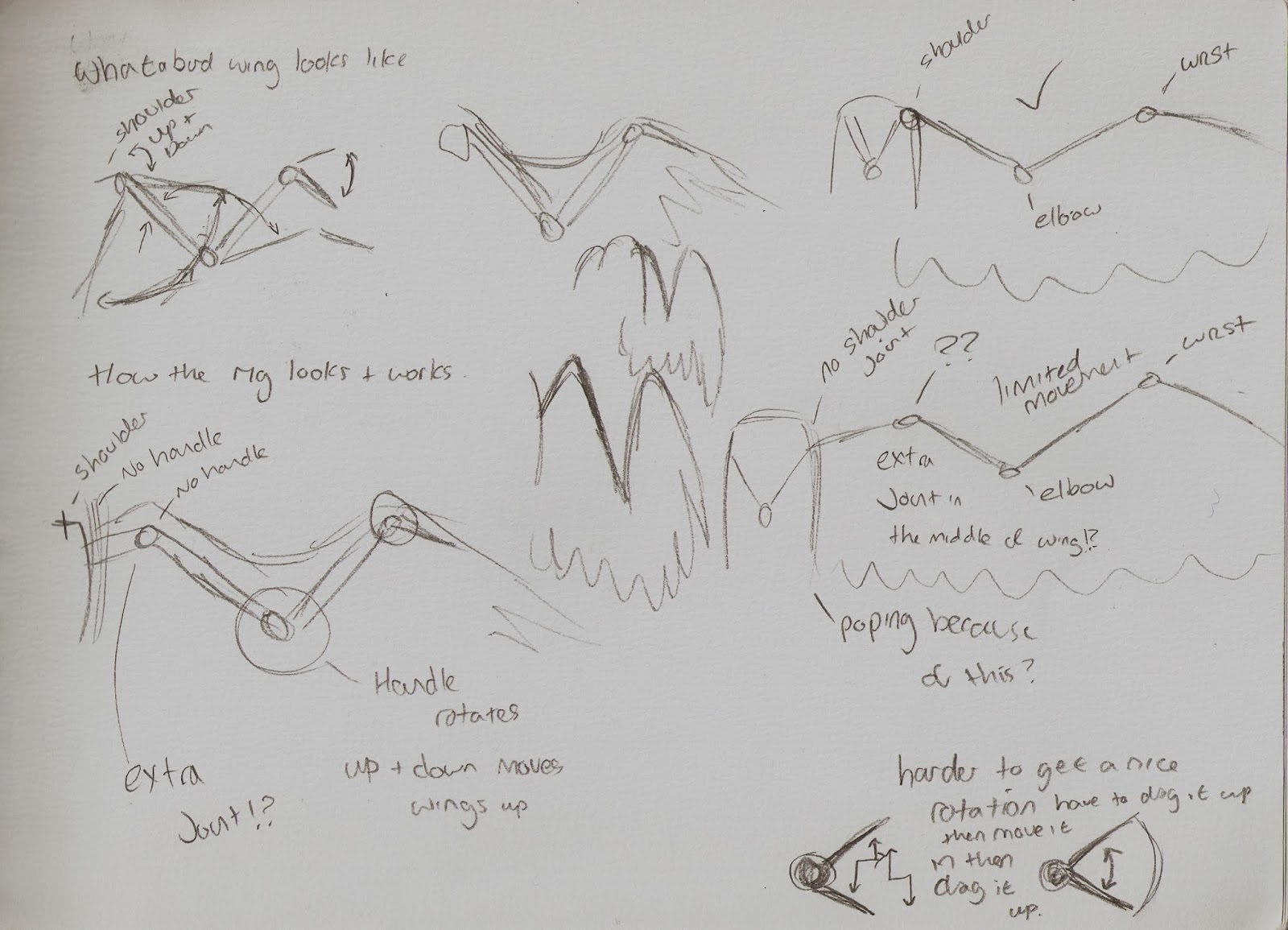 3d Animals In Motion Flight Cycle Sketches