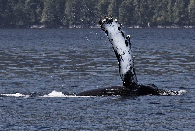 valas vesi virta koukku Keski määrin vuotta ennen avio liittoa