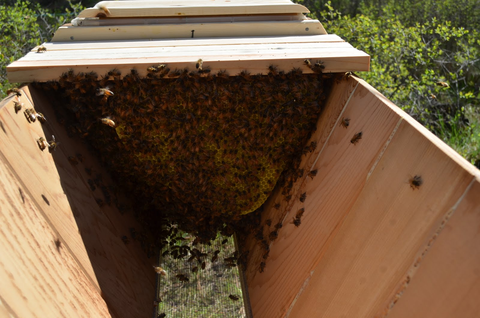 Top Bar Hives Vs Langstroth