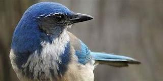 Inilah Burung Yang Meramal Orang Meninggal