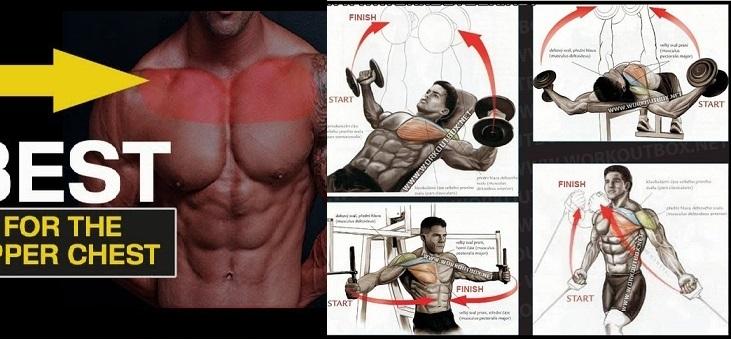 5 Techniques To Build The Upper Chest Www Bodybuilding110 Com