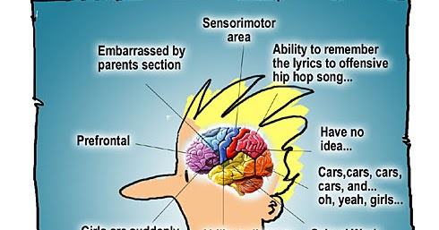 Parade magazine teen brains