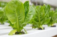 coltivazione-degli-ortaggi-indoor-consigli-utili