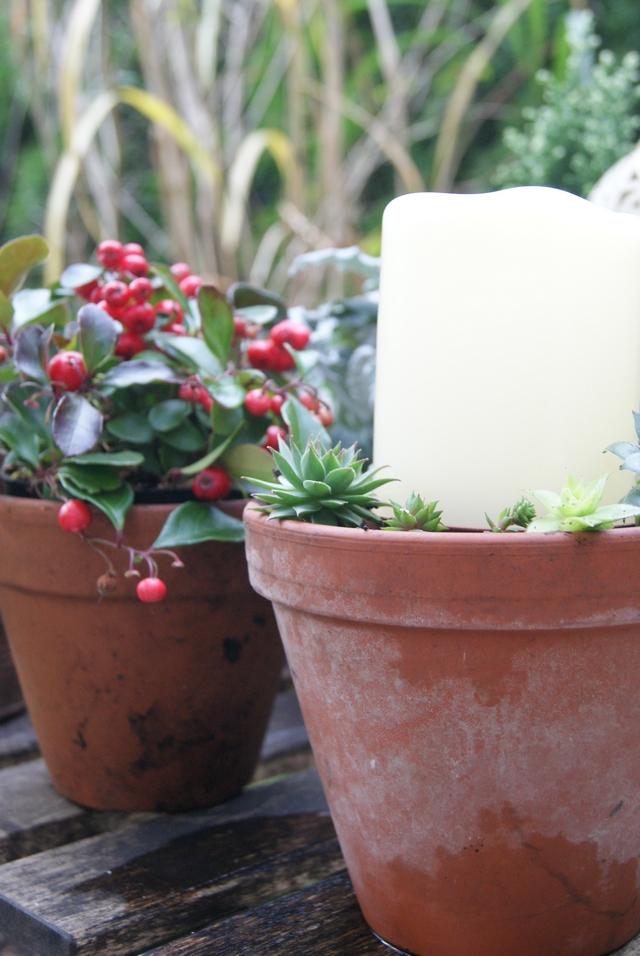 Outdoor-LED-Kerze im Tontopf mit Hauswurz