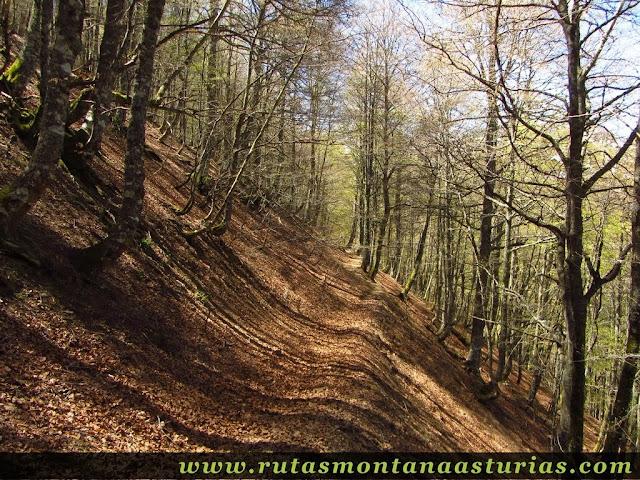 Sendero en el bosque al Tabayón del Mongayu