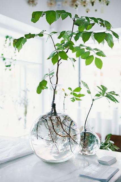 vasi in vetro