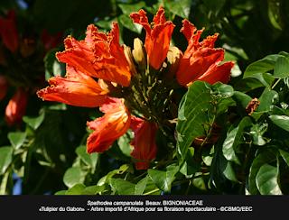 Les facteurs exogènes de la croissance des plantes