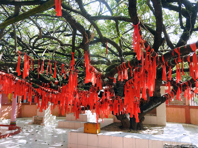 tree, Tripura, Unakoti, Laxmi Narayan Mandir