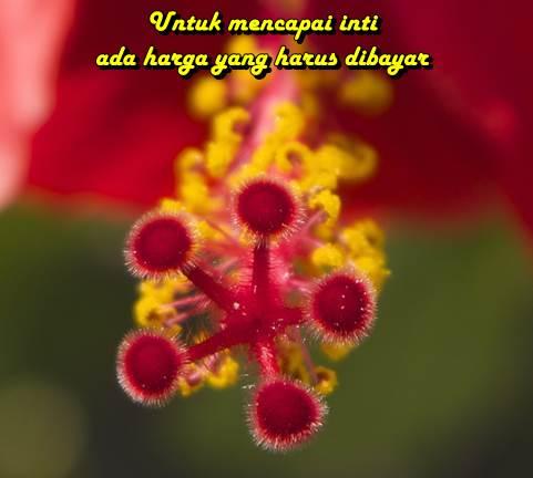 kiat jitu Sayangnya Allah Kepada Hamba Yang Mukmin Ketika Sakit www.kiatjitu.com