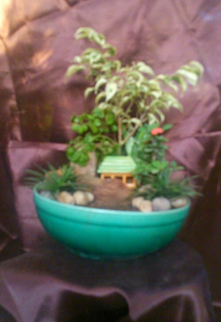 mini garden in pot