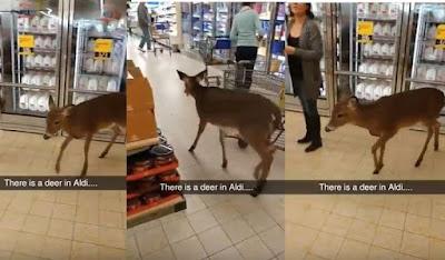 Ελάφι εθεάθη στο σούπερ μάρκετ να κάνει τα…ψώνια του!