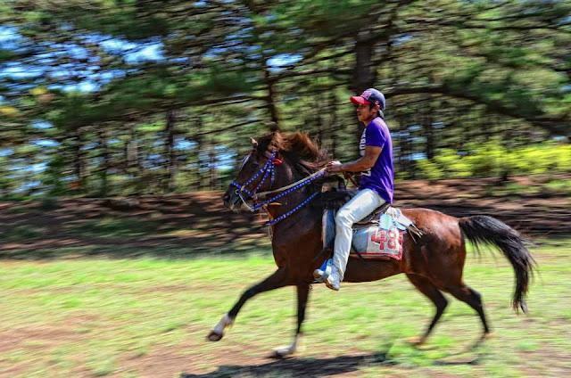 Equine panning shot