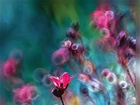 Fondos Wallpaper de Flores para Teléfonos Móviles
