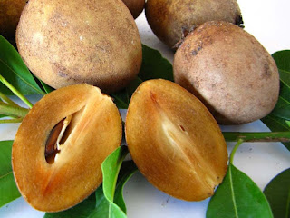 sapodilla fruit images wallpaper