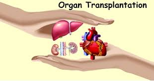lawji.in-Organ-transplantation-and-legislation-in-India-lawji.in