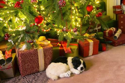 Preparaty uspokajające dla psów i kotów, czyli Sylwester i Święta bez stresu