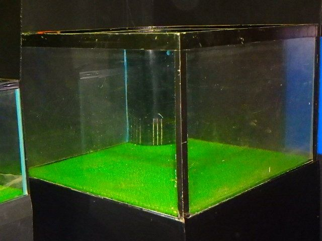 Image What You Must Know About Betta Breeding Tank