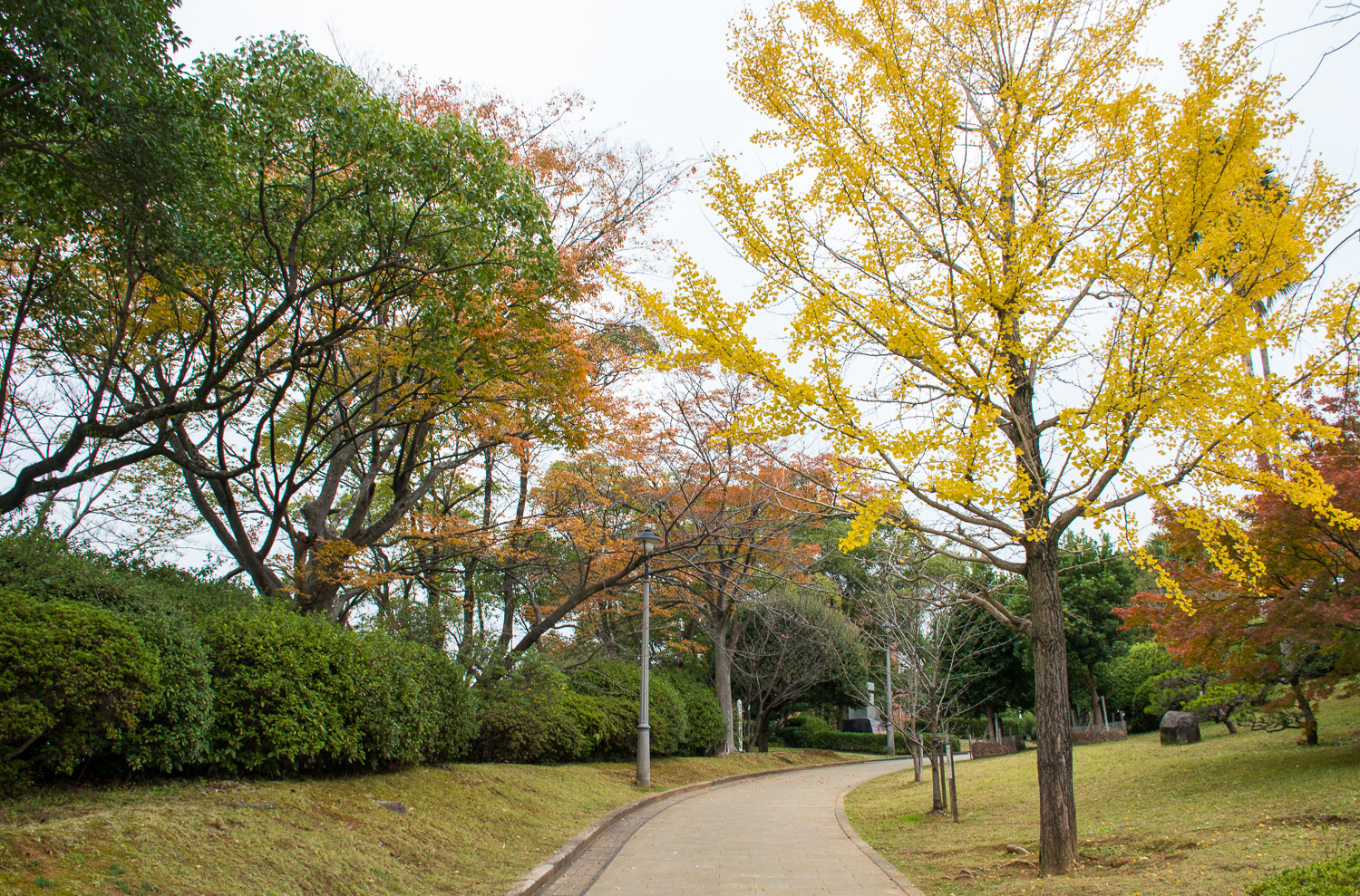 Autumn weather and trees in nagasaki peace park